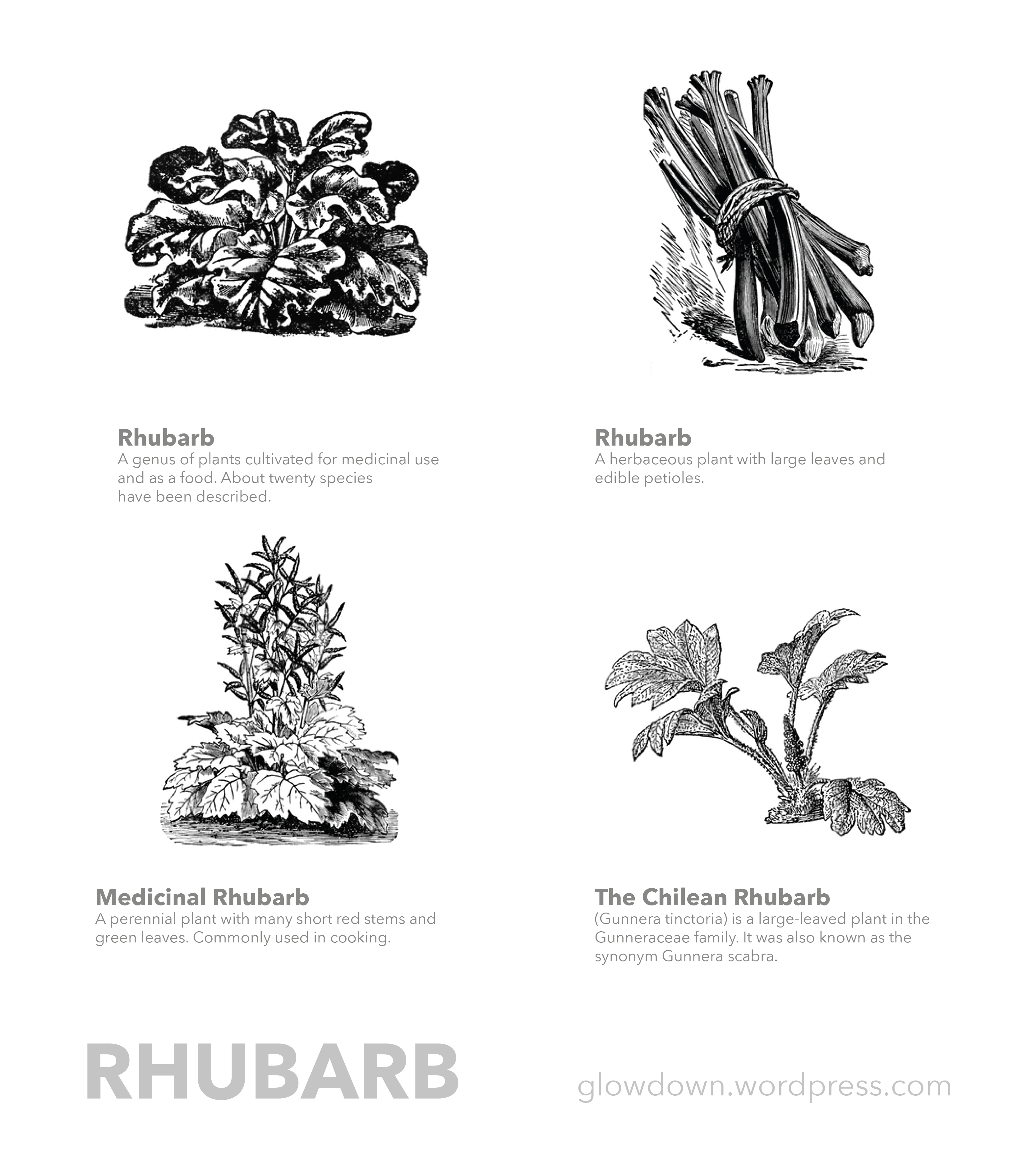 rhubarb coloring pages - photo#20