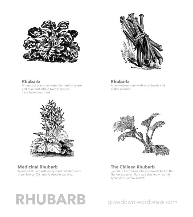 GD - Rhubarb-01